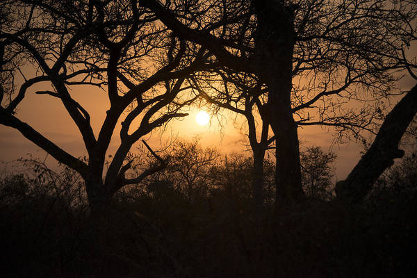 Photograph - African Sunset by Ramona Murdock