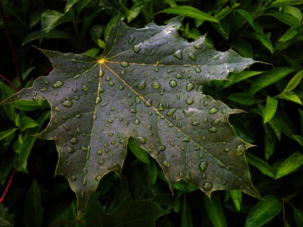 Photograph - After Rain 2 by Dragan Kudjerski