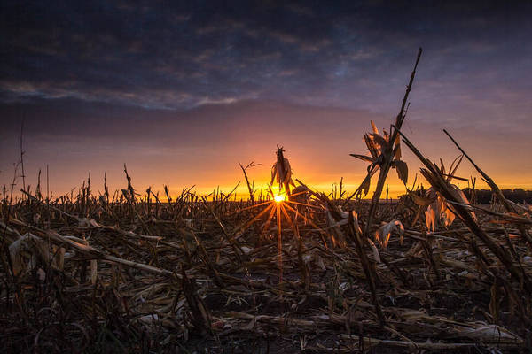 Wall Art - Photograph - After The Harvest  by Aaron J Groen