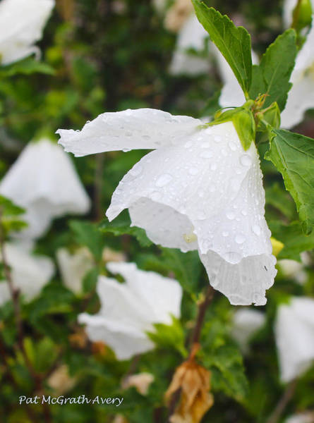 Photograph - After The Rain by Pat McGrath Avery