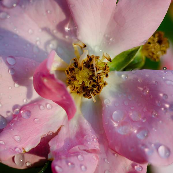 Photograph - After The Rain by Silvio Ligutti