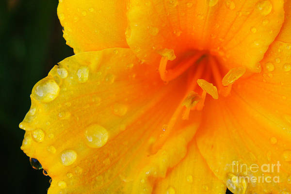 Photograph - After The Rain by Sue Harper