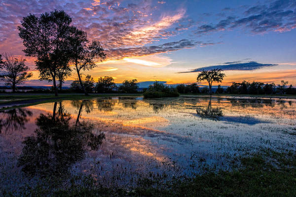 Wall Art - Photograph - After The Rains by Mary Amerman