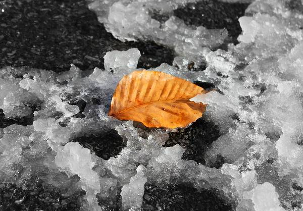 Photograph - After The Snow by Candice Trimble