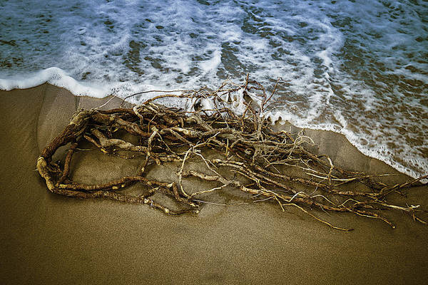 Driftwood Photograph - After The Storm by Garry Gay