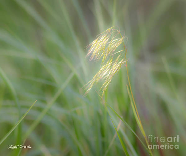 Photograph - Afternoon Light by Michelle Constantine