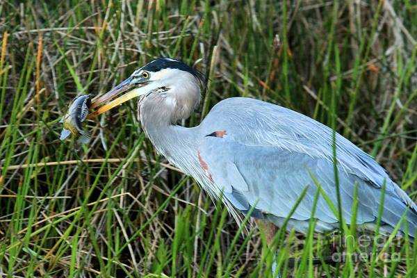 Photograph - Afternoon Snack by Adam Jewell