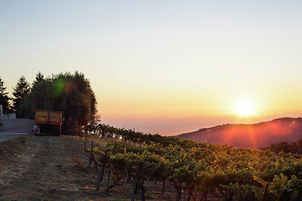 Woodside Photograph - Afternoon Sun Setting Over Vineyard by Clay McLachlan