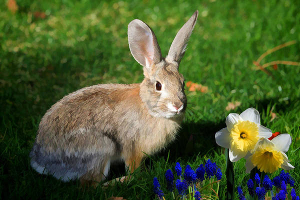 Cottontail Photograph - Against All Odds by Donna Kennedy