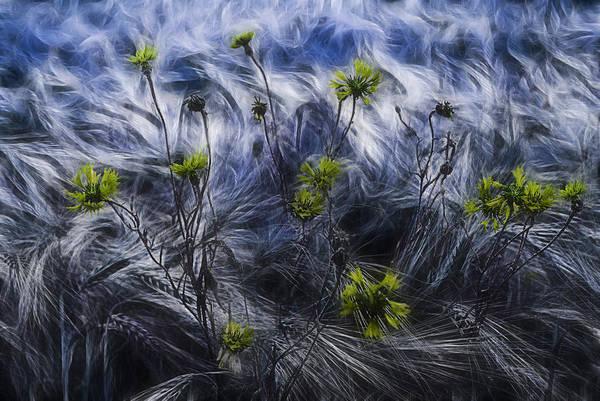 Cornfield Photograph - Against The Wind by Joachim G Pinkawa