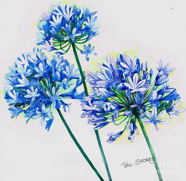 Painting - Agapanthus by Val Stokes