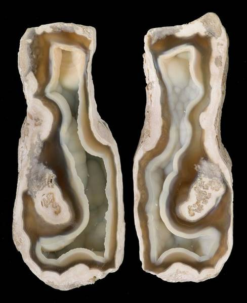 Geodes Photograph - Agatised Coral by Natural History Museum, London/science Photo Library
