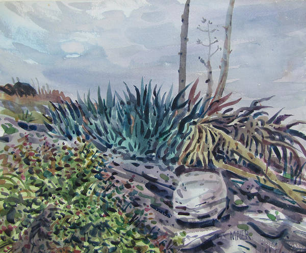 Agave Painting - Agave by Donald Maier