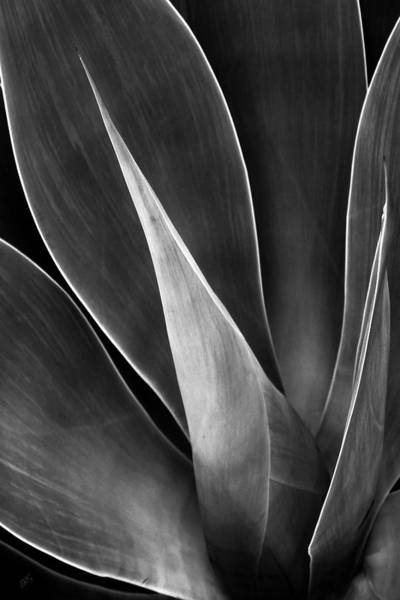 Wall Art - Photograph - Agave No 3 by Ben and Raisa Gertsberg