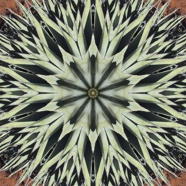 Agave Star Art Print