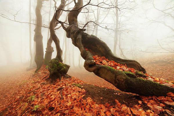 Autumn Season Wall Art - Photograph - Age... by Daniel ?e?icha
