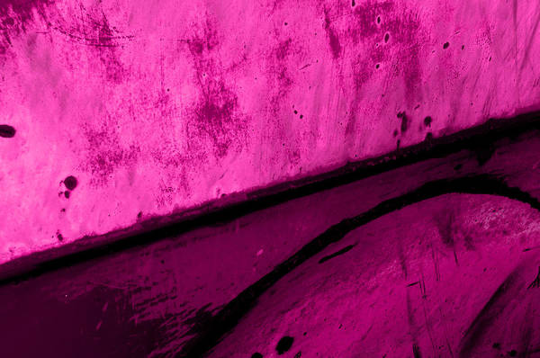 Photograph - Aging Pink by Fran Riley