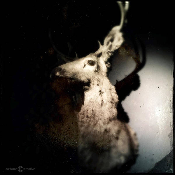 Photograph - Aging Trophy Deer by Tim Nyberg