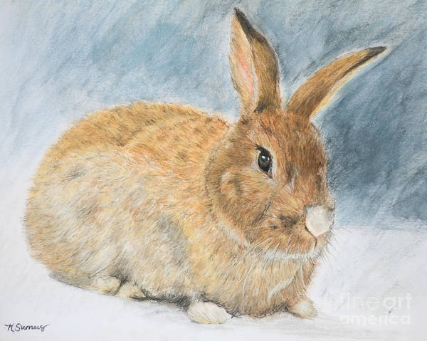 Art Print featuring the painting Agouti Pet Rabbit by Kate Sumners