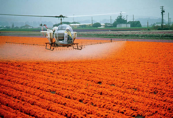 Biological Pest Control Photograph - Agricultural Helicopter Spraying A Flower Crop by Peter Menzel/science Photo Library