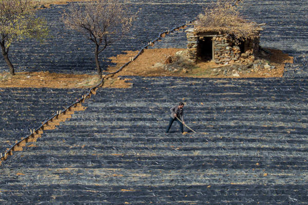 Wall Art - Photograph - Agriculture by Murat Ozel