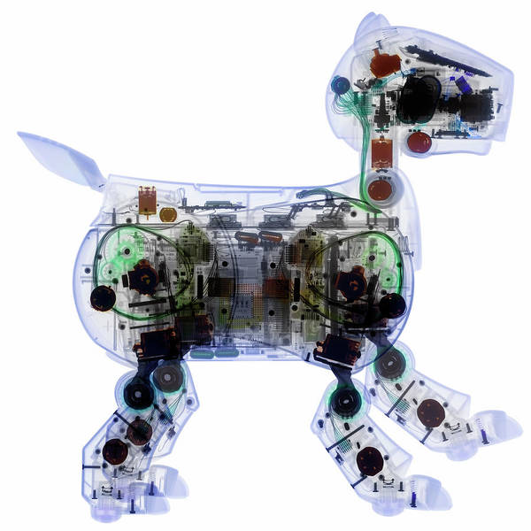 Wall Art - Photograph - Aibo Robot Dog by Gustoimages/science Photo Library