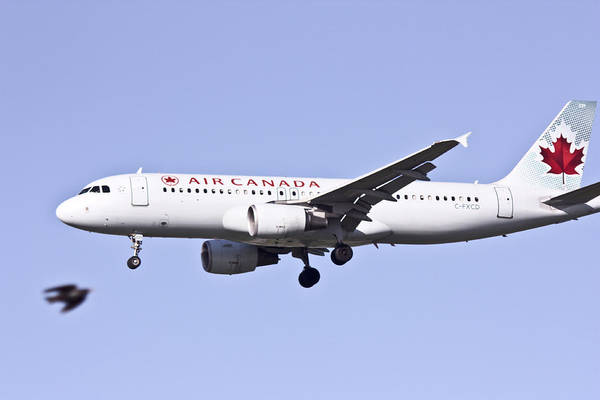 Photograph - Air Canada by Nick Mares