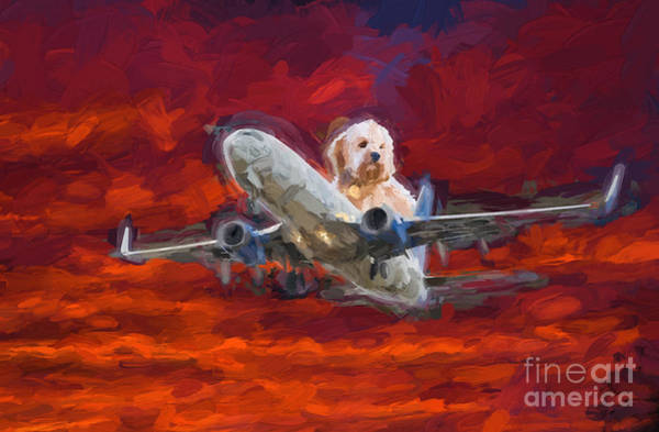 Photograph - Fluffy Dog Piloting A Plane by Les Palenik