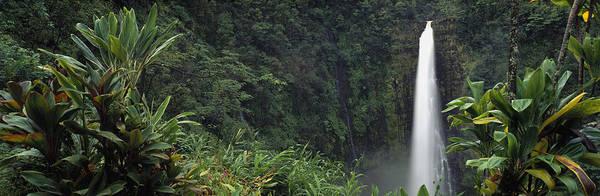 Wall Art - Photograph - Akaka Falls State Park, Hawaii, Usa by Panoramic Images