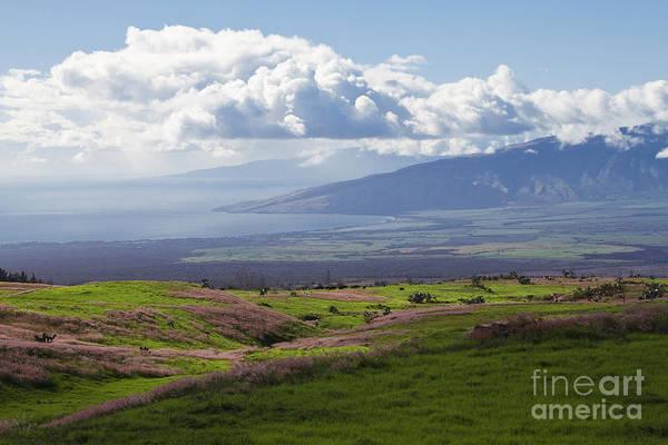 Pennisetum Photograph - Akeakamai - Maui Hawaii by Sharon Mau