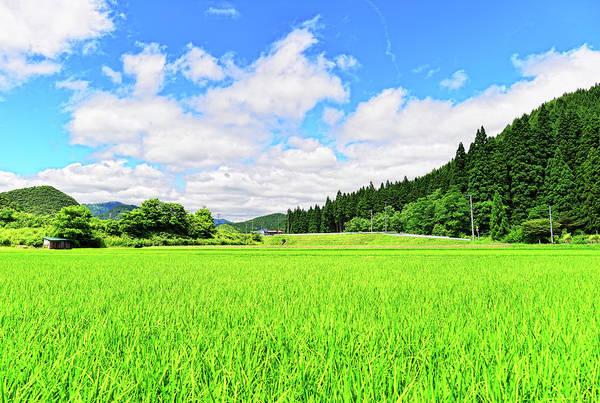 Japan Photograph - Akita Rice. Japan by Photo By Glenn Waters In Japan