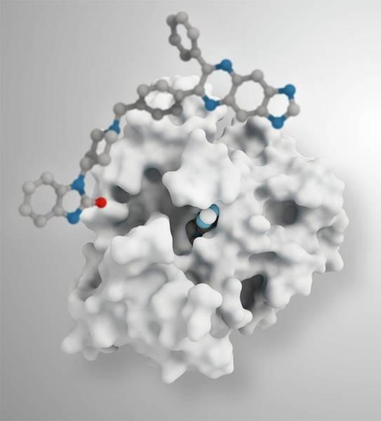 Molecular Wall Art - Photograph - Akt1 Human Enzyme Molecule by Ramon Andrade 3dciencia/science Photo Library