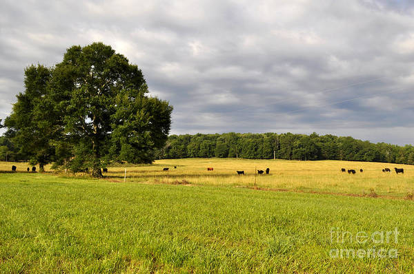 Wall Art - Photograph - Alabama Valley by Verana Stark