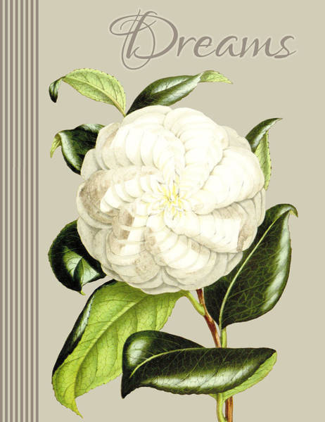 Wall Art - Drawing - Alabaster Blossom E Vertical by MGL Meiklejohn Graphics Licensing