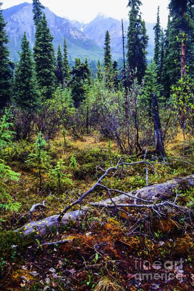 Photograph - Alaska Mountain Range Wilderness by Thomas R Fletcher