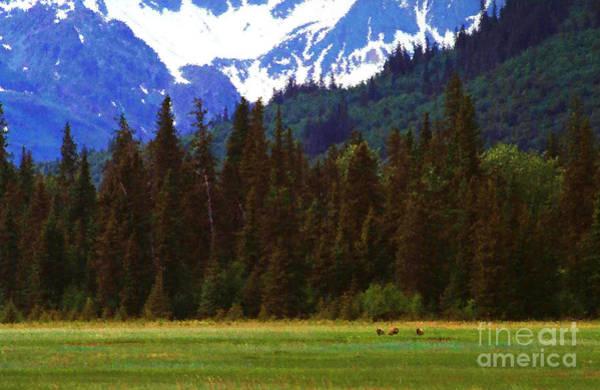 Photograph - Alaska  by Thomas R Fletcher