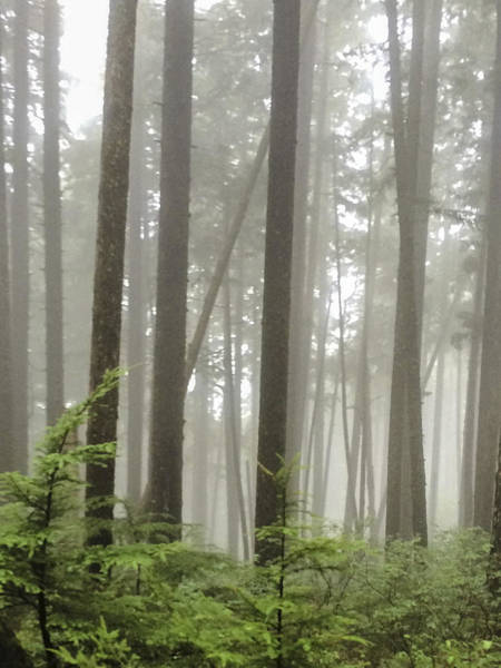 Photograph - Alaska Tongass Forest by Karen Zuk Rosenblatt