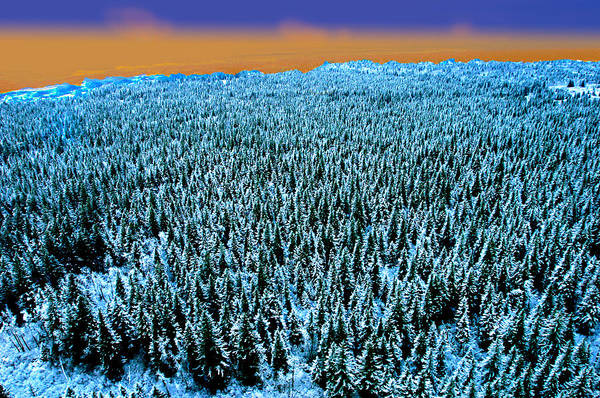 Wall Art - Photograph - Alaska Woods by Frank Savarese