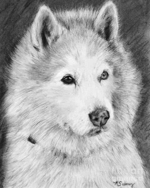 Art Print featuring the drawing Alaskan Malamute Drawing Mardi by Kate Sumners