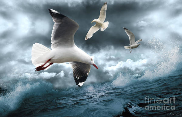 Seagull Digital Art - Albatross by Linda Lees