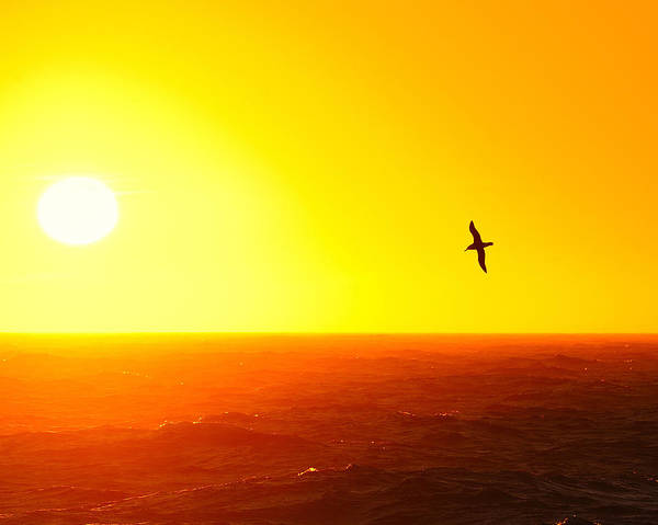 Photograph - Albatross Over The Scotia Sea by Tony Beck