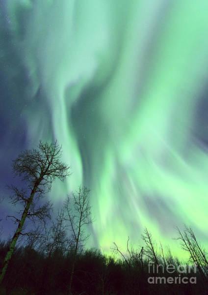 Photograph - Alberta Aurora by Dan Jurak