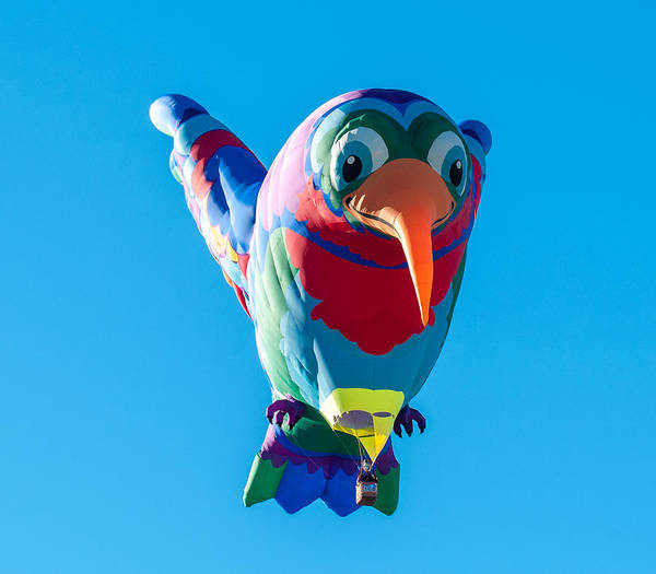 Photograph - Albuquerque Balloon Fiesta 8 by Lou  Novick