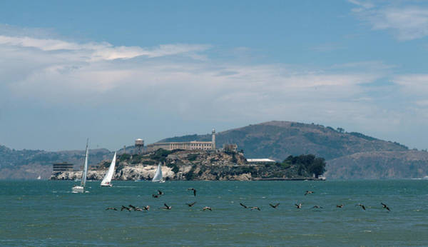 Photograph - Alcatraz With Pelicans by Wesley Elsberry