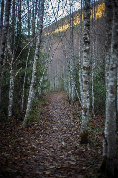 Alder Photograph - Alder Path by Mike Reid
