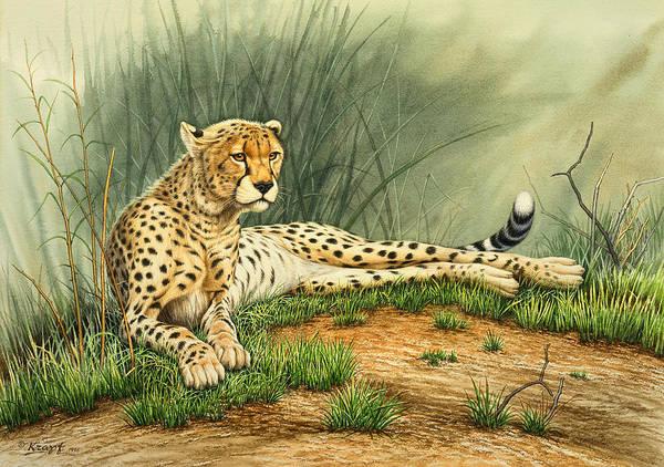 African Wildlife Painting - Alert Repose  - Cheetah by Paul Krapf