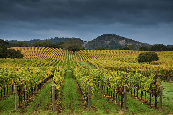 Winemaking Photograph - Alexander Valley by Rmb Images / Photography By Robert Bowman