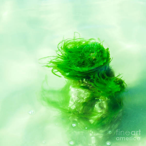 Photograph - Alga Dancer by Hannes Cmarits