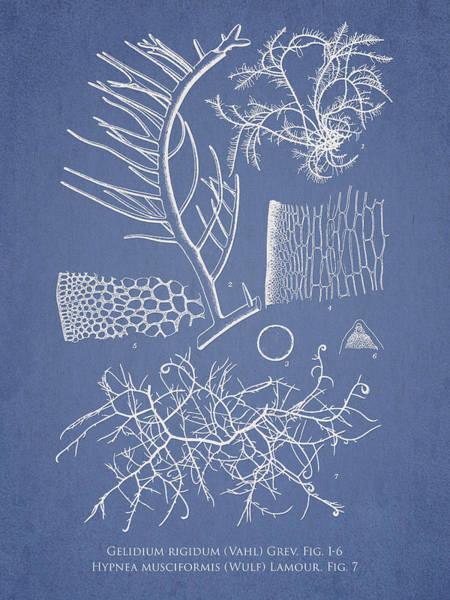 Aquarium Digital Art - Algae by Aged Pixel