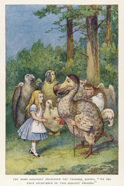 Wall Art - Drawing - Alice And The Dodo -- The Dodo Solemnly by Mary Evans Picture Library